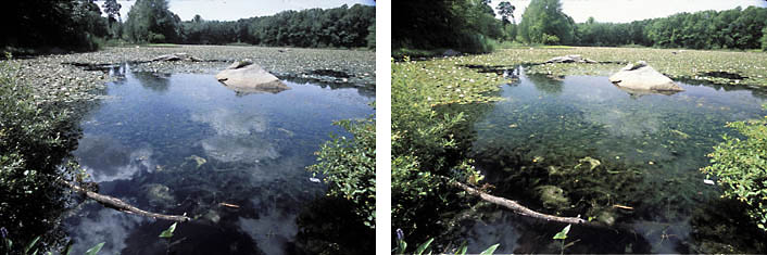 Polarizing Filter example